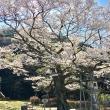 マロンさんの岐阜護國神社の写真3