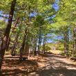 マロンさんのめい想の森の写真2