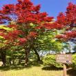 マロンさんのめい想の森の写真3