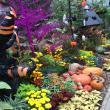 マロンさんの花フェスタ記念公園の写真2