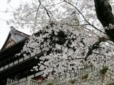 宗休寺(関善光寺) の写真
