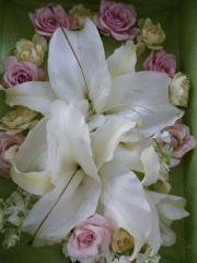 ショップ&サロン花*花_たくさんの感謝を込めて 贈物特集_写真1