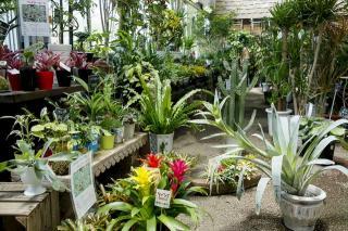 長良園芸_観葉植物コーナーも驚く品揃え