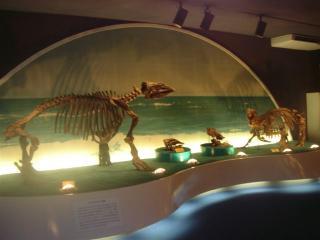 瑞浪市化石博物館の写真