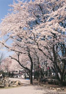 岐阜公園長良川堤の写真