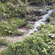 ゆかそさんの能郷白山の写真2