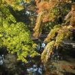 曽木公園へのレッツなシニアさんの投稿写真