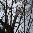 弓削寺へのレッツなシニアさんの投稿写真