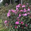瀬戸さんさんの田嶋農園の写真4