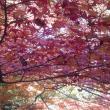 ポニョさんの岐阜県百年公園の写真2