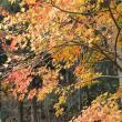 佐見川峡へのレッツなシニアさんの投稿写真