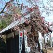 宗休寺(関善光寺) へのレッツなシニアさんの投稿写真