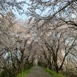 大島堤へのにしこさんの投稿写真