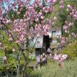 日本昭和音楽村へのレッツなシニアさんの投稿写真
