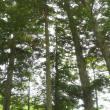 岩井山延算寺へのポニョさんの投稿写真