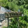 にしこさんの天空の茶畑の写真3