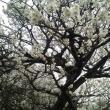 梅林公園へのポニョさんの投稿写真