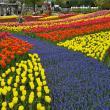 にしこさんの国営木曽三川公園の写真1