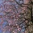梅林公園へのまなみさんの投稿写真
