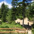 まなみさんの西穂高岳の写真1