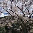 にしこさんによる岐阜護国神社のクチコミ写真1