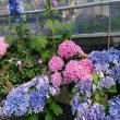 ヨゼさんによる伊木山ガーデンのクチコミ写真3
