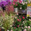 ヨゼさんによる伊木山ガーデンのクチコミ写真4