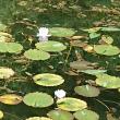 名もなき池へのヨゼさんの投稿写真