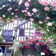あさみんさんによる薔薇舘イングリッシュ・ローゼの写真