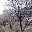 睦橋へのしまりすさんの投稿写真