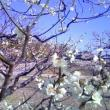 あさみんさんによる蘇原自然公園の写真
