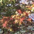 県立自然公園恵那峡へのsayoさんの投稿写真