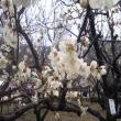 ゆかそさんの梅林公園の写真3