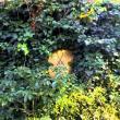 えびさんによるプティ・ミュゼ シェ・ドームのクチコミ写真3