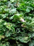mau農園の野菜_写真