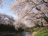 新境川の写真
