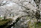 関川の写真