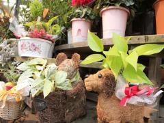 フラワーショップ四季花と緑のある暮らし_写真