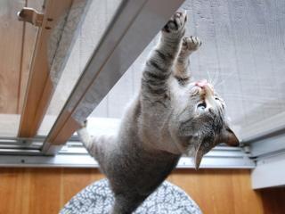 【ペット対応・あみ戸】破れないあみ戸!|ペット専用のあみ戸もあり。猫が引っかいても簡単に破れないあみ...