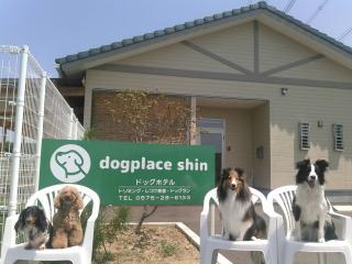 dogplace shinの写真