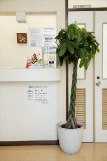 ダスキントータルグリーン(観葉植物レンタル)_クリニックの受付を心地よく