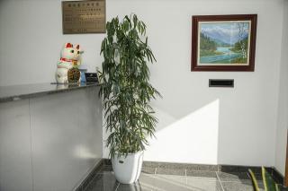 観葉植物レンタル ダスキントータルグリーン_会社の玄関に置くことで…