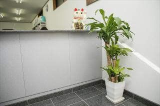 ダスキントータルグリーン(観葉植物レンタル)_見た目だけでなく言い伝えも…