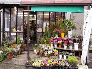 お気軽にお立ち寄りください|フレッシュでカラフルな花の数々を常に取り揃えています。心を込めて花を贈り...