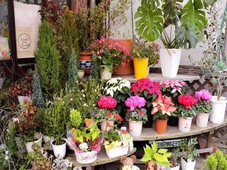 お部屋に置きたくなる鉢物も充実|窓辺にそっと一輪の花があるだけで気持ちが変わることがあります。花を見...