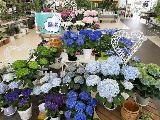 Floral 花夢館 岐南店_お知らせ