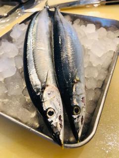 Cucina  Futamura_お知らせ