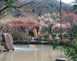 梅林公園の写真
