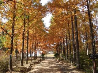 めい想の森の写真
