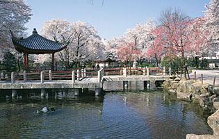 日中友好庭園の写真